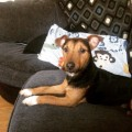 ALFIE from HA8 (North East) - click to find out more