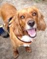 HARVEY from DH3 (North East) - click to find out more
