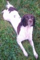MIA from SP3 (South West) - click to find out more