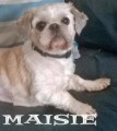MAISIE from CH49 (North West) - click to find out more