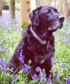 TIGGER from RH2 (South East) - click to find out more