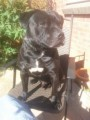 BUSTER from TA6 (South West) - click to find out more