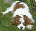 ARCHIE from SN12 (South West) - click to find out more