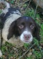 BRACKEN from PR4 (North West) - click to find out more