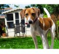 PEPPA from BH12 (South West) - click to find out more