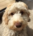HONEY from SW19 (South East) - click to find out more
