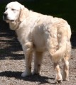 INCA from SY23 (Wales) - click to find out more