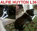 ALFIE from IV36 (North West) - click to find out more