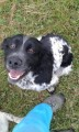JACK RESCUE DOG WILL NOT KNOW AREA from NG33 (Central) - click to find out more