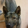 KITA from LS14 (North East) - click to find out more