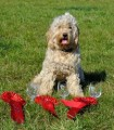 TILLY from BD24 (North East) - click to find out more