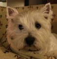 BUSTER from YO61 (North East) - click to find out more