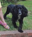 LOTTIE from NR11 (East Anglia) - click to find out more