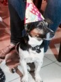 ARCHIE from ALL AREAS (Southern Ireland) - click to find out more