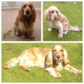 POPPY  POSSIBLE SIGHTING PLEASE SHARE from TQ10 (South West) - click to find out more