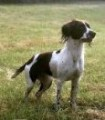 LOTTIE from GL6 (South West) - click to find out more