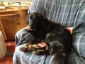 BUSTER from BS8 (South West) - click to find out more