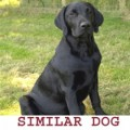 BUSTER from NR21 (East Anglia) - click to find out more