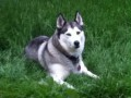 MOUSHKA from NR4 (East Anglia) - click to find out more