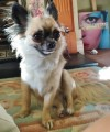 TINKERBELL from KT17 (South East) - click to find out more