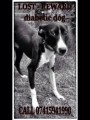 DIABETIC DOG from BR5 (South East) - click to find out more