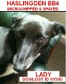 LADY POSSIBLE MATCH IN KENNELS from BB4 (North West) - click to find out more