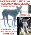 LUCY ROMANIAN RESCUE SIGHTED DO NOT TRY TO CATCH OR CHASE HER from LA4 (North West) - click to find out more