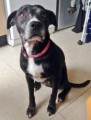 POOCHY from E13 (South East) - click to find out more
