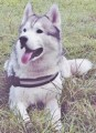 NANOOK from S44 (North East) - click to find out more