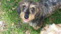 ARCHIE from SL9 (South East) - click to find out more