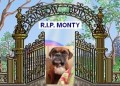 MONTY from PR9 (North West) - click to find out more