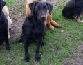 SIKA from YO17 (North East) - click to find out more
