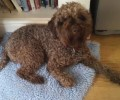 HEBE from GU10 (South East) - click to find out more