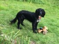 COCO from EH4 (Scotland) - click to find out more