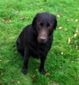 PEPPA from SP4 (South West) - click to find out more