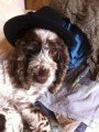 LILLY from CB11 (South East) - click to find out more