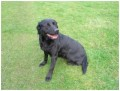 MEMI from HR2 (South West) - click to find out more