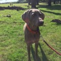 NALA from GU8 (South East) - click to find out more