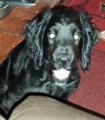 PUPPY STOLEN from DN15 (North East) - click to find out more