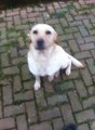 MILLIE from SR7 (North East) - click to find out more