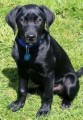 NALA STOLEN PUPPY from PO18 (South East) - click to find out more