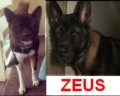 ZEUS  from DE11 (Central) - click to find out more