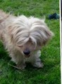 SUZI IS BLIND from DN15 (East Anglia) - click to find out more
