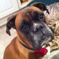 ROLO from SA14 (Wales) - click to find out more