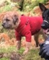 MONTY from RH16 (South East) - click to find out more