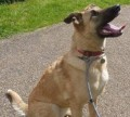 RUSSIAN RESCUE DOG from E12 (South East) - click to find out more